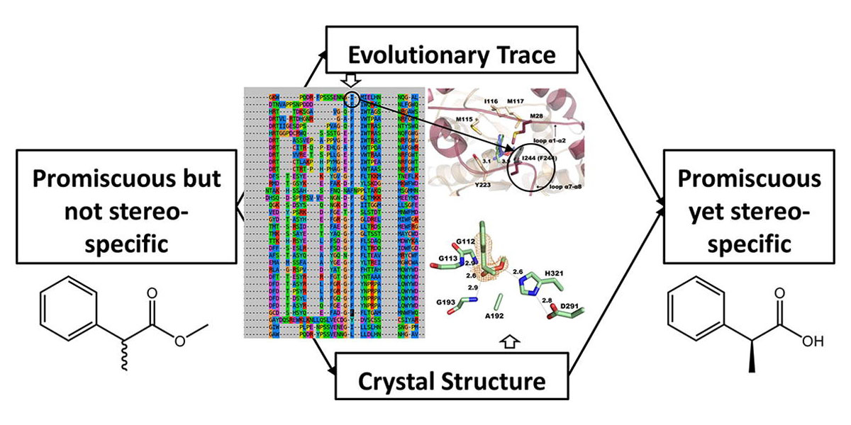 Structure and evolutionary