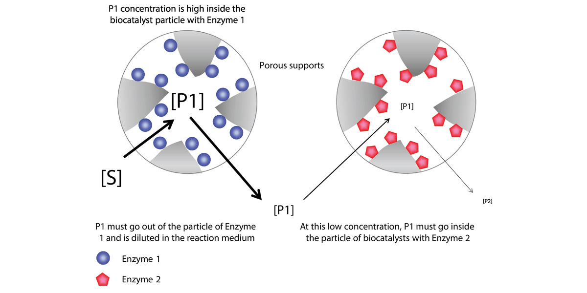 Enzyme co immobilization